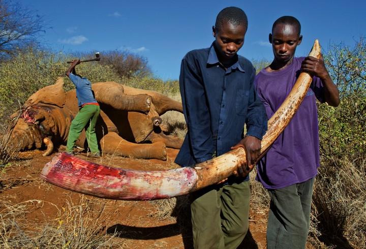 caça_elefantes
