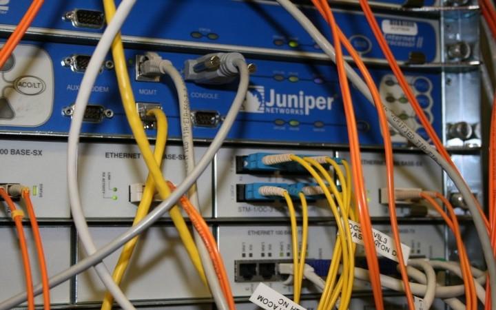 juniper_2