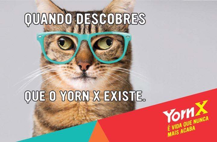 yorn_02