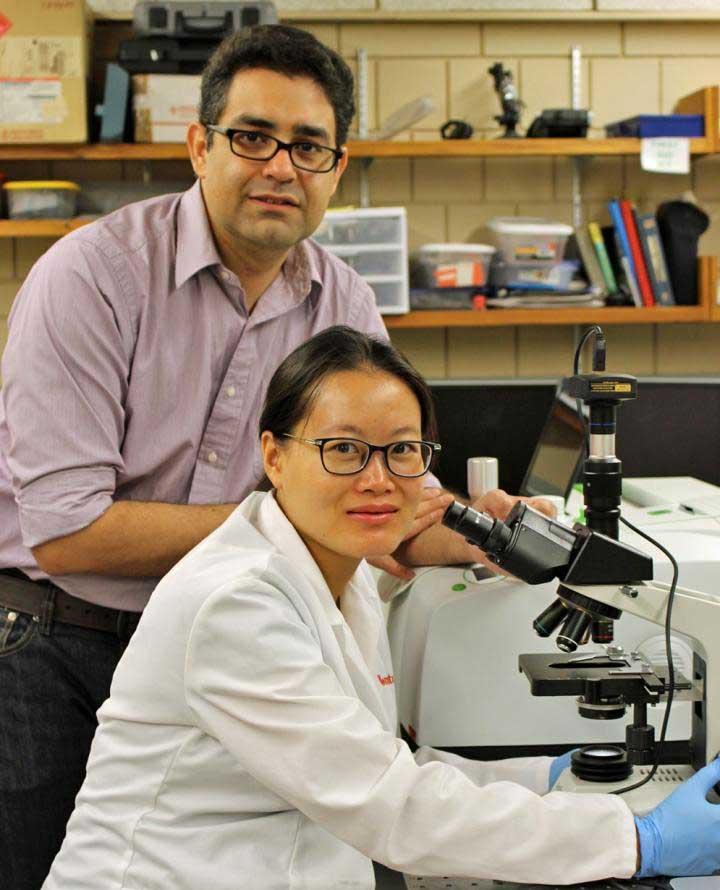Reza Montazami à esquerda e Yuanfen Chen à direita, cientistas na Universidade Estatal de Iowa
