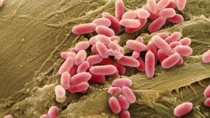 Sem oxigénio e em estado latente, as bactérias que compõem o biobetão podem permanecer vivas duranter séculos, dizem cientistas