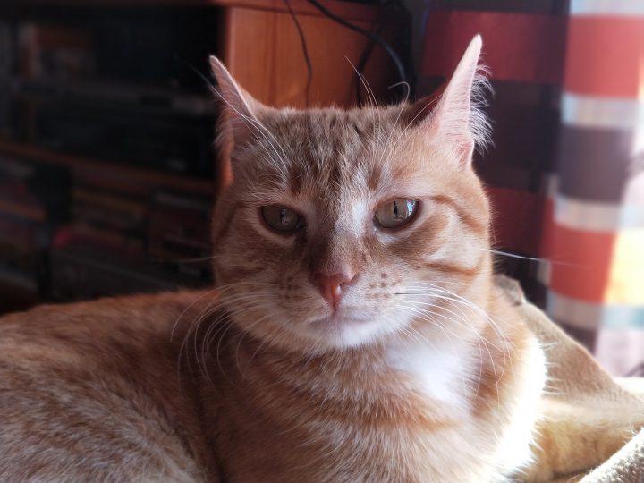 OnePlus 5 - foto 06