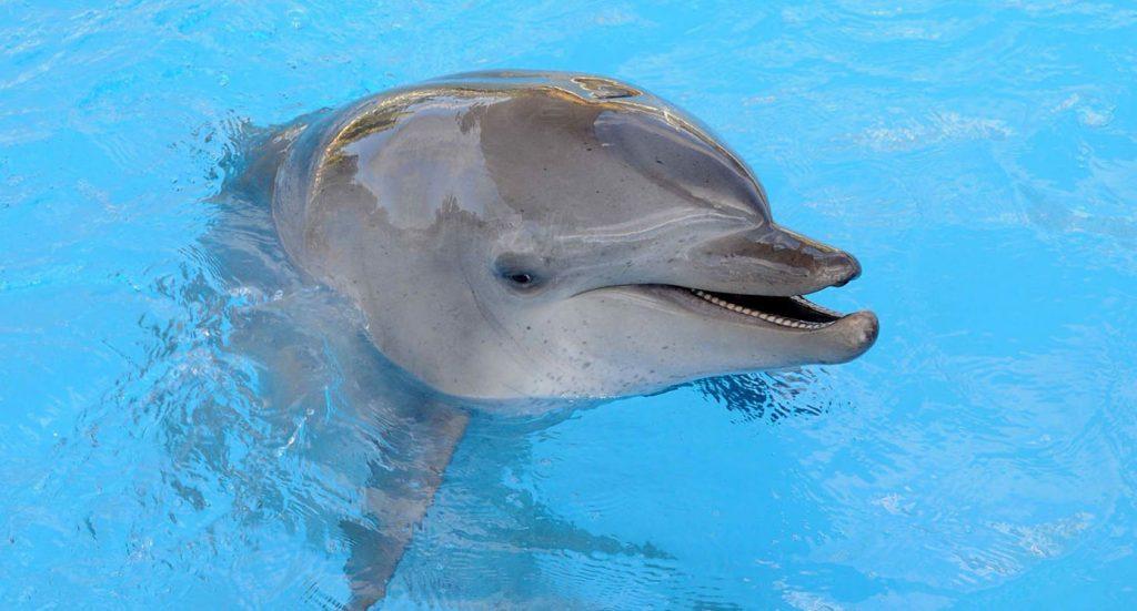 Imagem de um golfinho