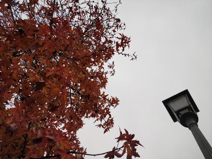 OnePlus 5 - foto camara 06