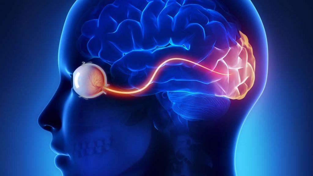 O cérebro pode levar um nó