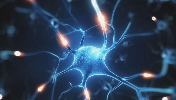 Ilustração dos neurónios do nosso cérebro