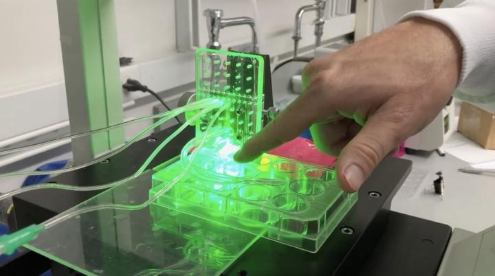Impressora 3D a imprimir tecido humano