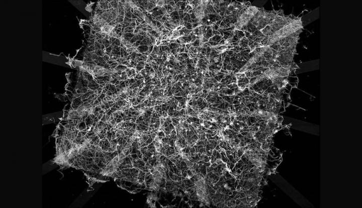 """Cientistas criaram um """"Cérebro Sintético"""""""