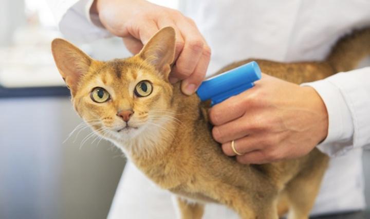 Portugal: Gatos vão ser obrigados a ter chip até 2021