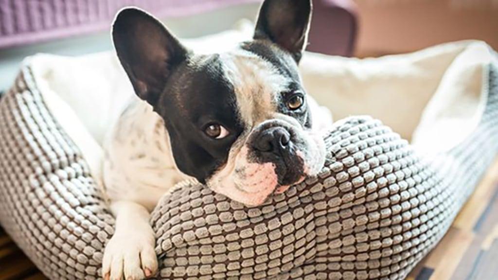 Tecnologia de reconhecimento nasal quer manter o seu cão em segurança