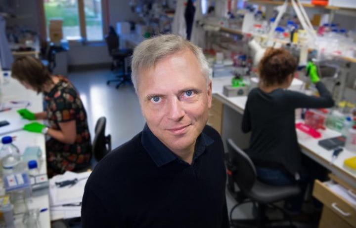 Investigadores descobrem novo órgão de dor localizado na pele