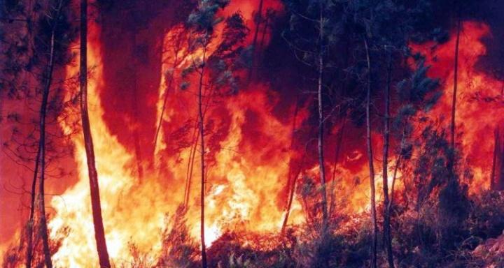 A Amazónia está a arder! Nuvem de fumo já é visível do espaço