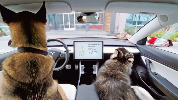 Tesla Dog Mode carros ocupantes problema