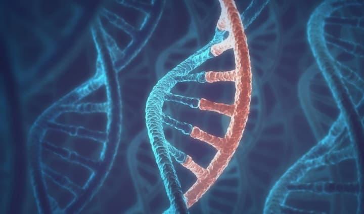 Por que envelhecemos? Qual é o papel do DNA no envelhecimento?