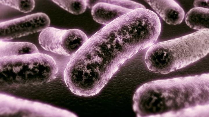 Imagens de ilustração de bactérias que comem energia