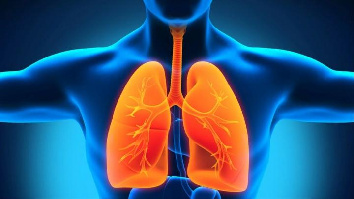 """Gripe induz a proliferação de """"células gustativas"""" no pulmão"""
