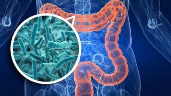 Imagem ilustrativa de micróbios no intestino de prevêem a morte