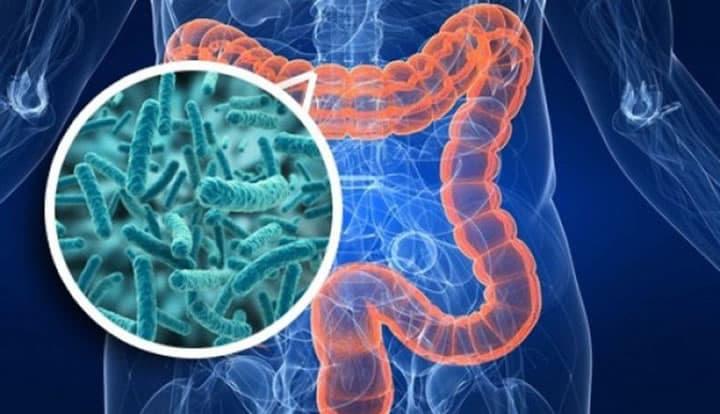 Representação do intestino grosso do corpo humano, com zona de ampliação para micróbios
