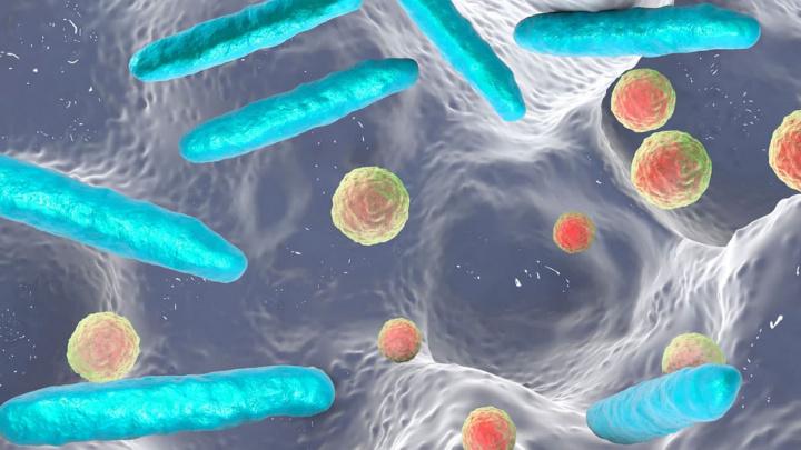 Imagem de intestino com micróbios e bactérias