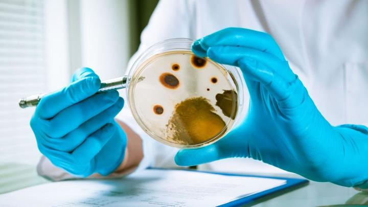 Imagem da análise de micróbios do intestino para comparar com genoma. Ambos podem prever a morte
