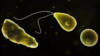 Novo vírus descoberto no brasil nas amebas
