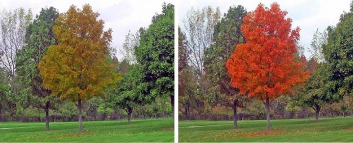 A visão de daltónico à esquerda e a visão corrigida com a lente de contacto à direita.