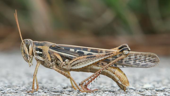 Imagem inseto pisteiro