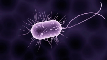 Imagem micróbio que pode guardar informação no ADN