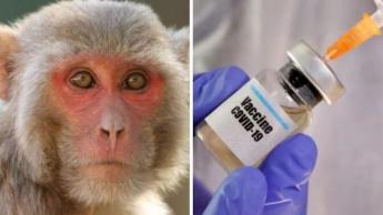 Imagem vacina ministrada em macacos