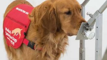 Imagem cão a cheirar amostras de COVID-19