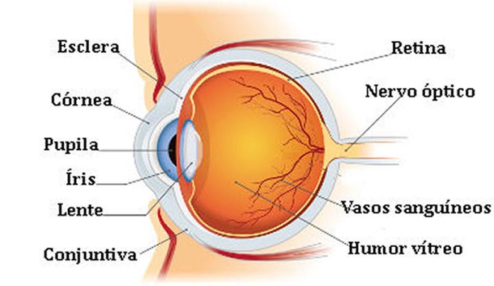 Imagem da composição do olho
