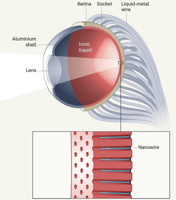 Imagem esquema do olho ciborgue