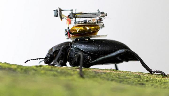 Imagem com besouro de GoPro às costas projeto com patrocínio Microsoft