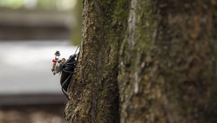 Imagem inseto com GoPro às costas projeto com patrocínio Microsoft