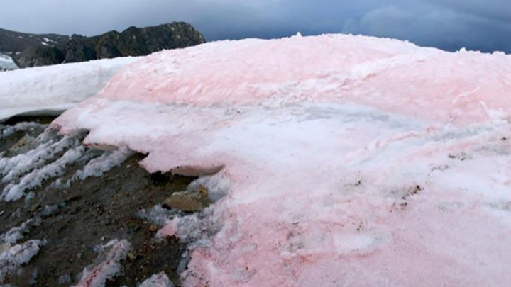 Neve Rosa? Cientistas investigam misterioso fenónemo num glaciar