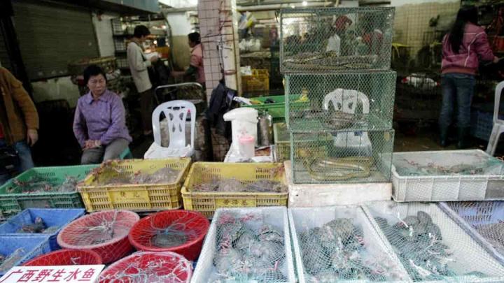 Comércio de animais selvagens na China.