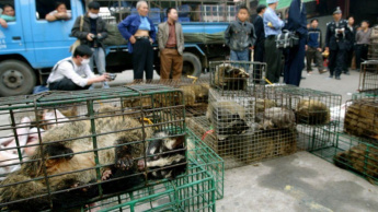 Mercado de animais selvagens na China.