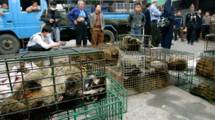 Mercado de animais selvagens na China.