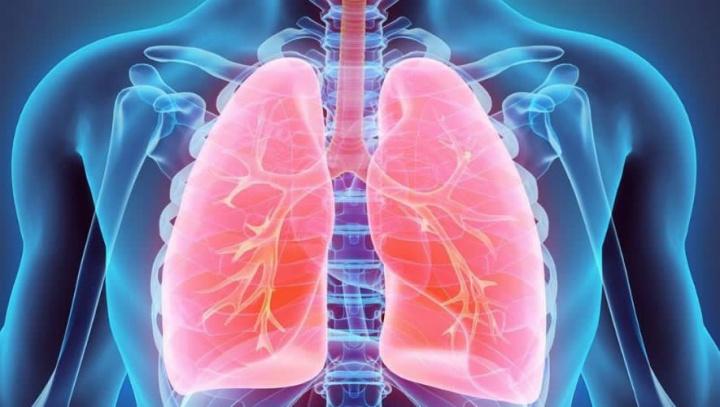 Imagem de pulmões que poderão ser curados se ligados a porcos