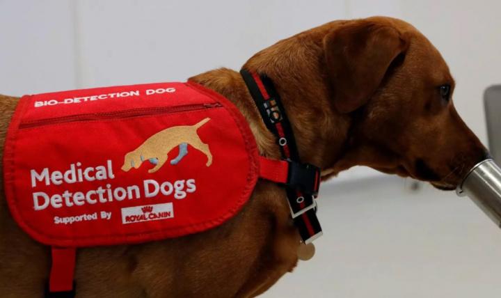 Cães conseguem detetar coronavírus com taxa de sucesso de 94%