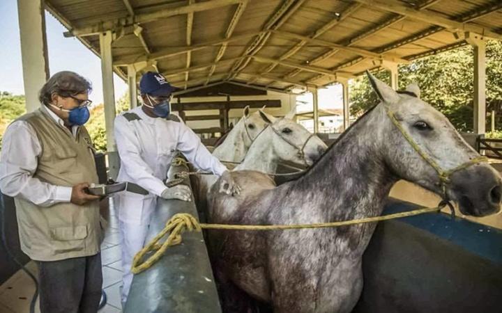 COVID-19: Investigadores criaram soro baseado em anticorpos de cavalos