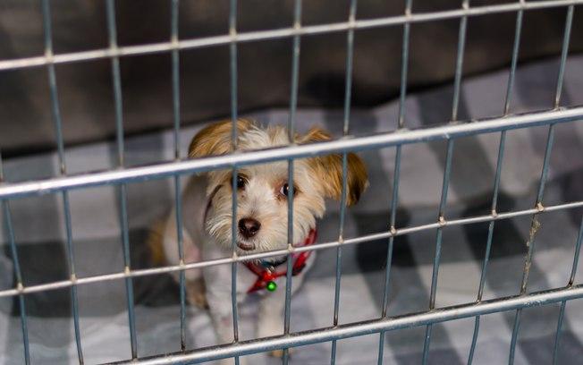 Atenção às burlas: Há sites falsos para a venda de cães...