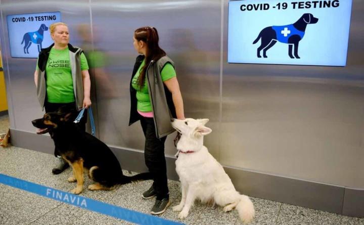 COVID-19: Cães são usados no aeroporto de Helsínquia para detetar vírus