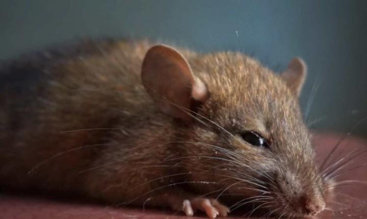 Confirmado! Vírus raro Chapare provoca contágio entre humanos