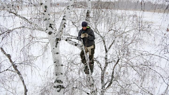 Aluno sobe a árvore com 8 metros para conseguir ter aulas online