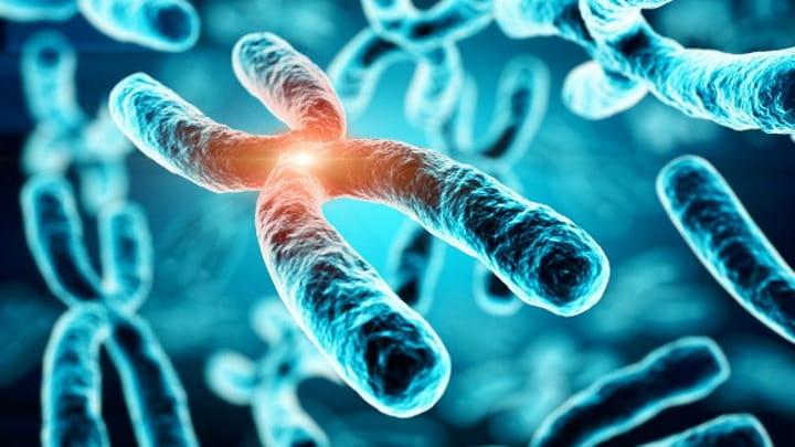 Cromossomas.