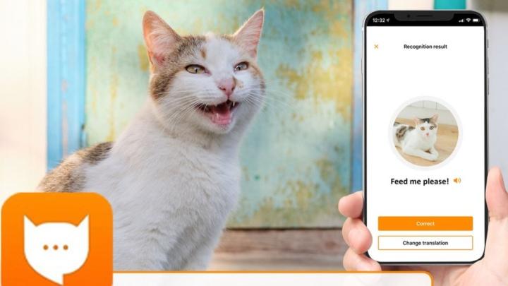 MeowTalk: A app que permite comunicar com o seu gato
