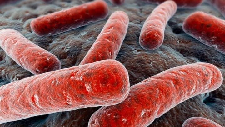 Imagem da bactéria de brucelose da China que escapou de um laboratório