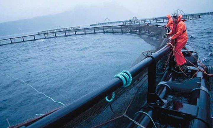 EllaLink liga Europa e América Latina através do primeiro cabo submarino
