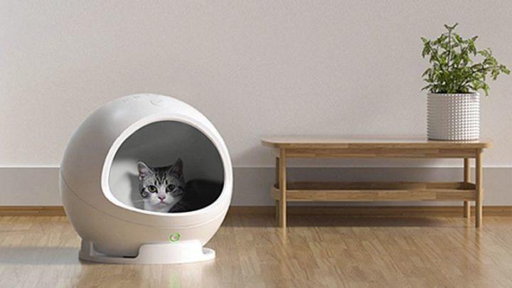 Os melhores produtos tecnológicos para... o seu gato!